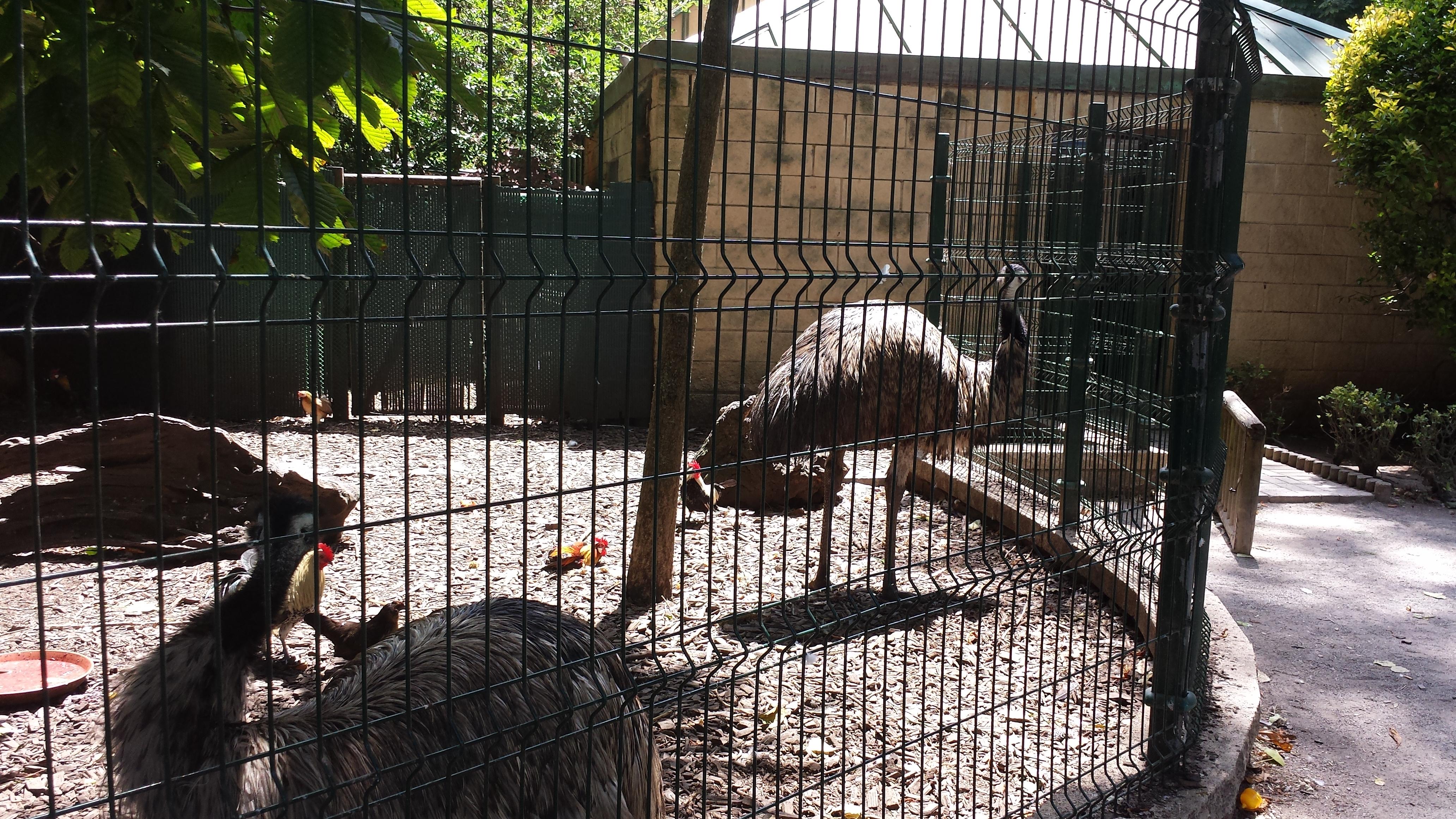 avestruces-isabel la catolica